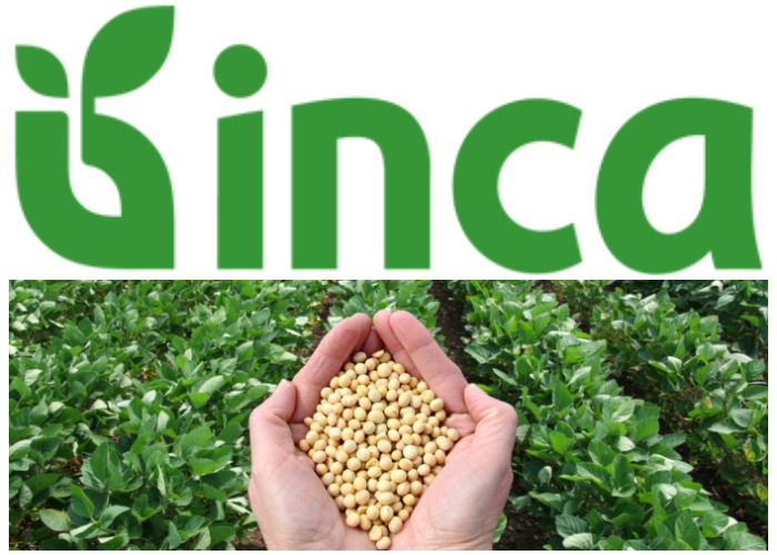 La cosecha de la soya pretende ayudar a combatir la crisis alimentaria en Cuba.
