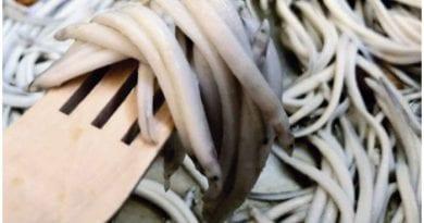 Las Tunas empezará a exportar angulas hacia Europa y Asia.