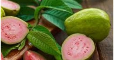 La guayaba es una deliciosa fruta tropical llena de gran cantidad de beneficios.