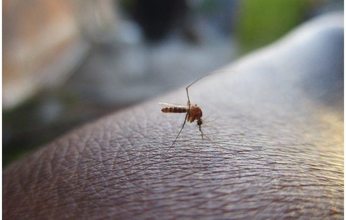 Dengue en Miami Dade - Foto