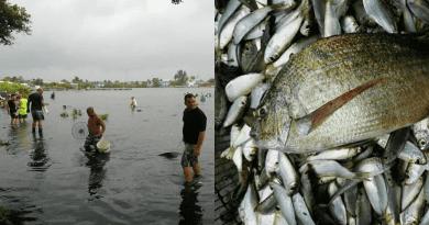 Capturan peces, con las manos, en la Bahía de Cienfuegos, ¡Gracias a Laura!