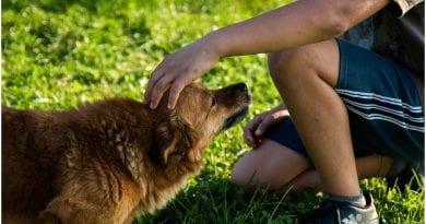 zoonosis adopcion animales
