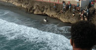 Encuentran ballena varada en una playa de Baracoa