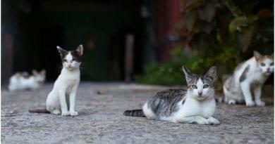 Decreto bienestar animal Cuba