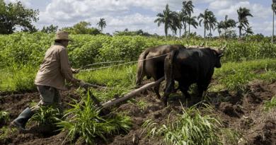 Cuba implementa 5 medidas para aumentar la producción de alimentos