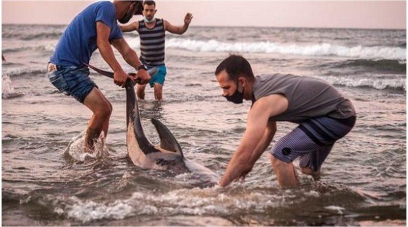 Delfines costa cojimar